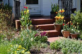 Small Picture Planting Container Tulips gardeninacity