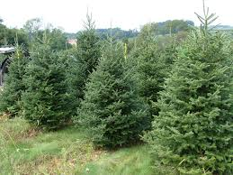 Support Local Christmas Tree Farms This Season  Clarksville TN Local Christmas Tree Lots