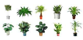 best indoor office plants. Great Office Plants Indoor Featured Best  For Desk Good .