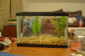 petco animals fish. Modren Petco Oh Baby Betta Fish To Petco Animals Fish D