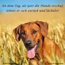 Die 14 Besten Bilder Auf Zitate In 2013 Hunde Hund Zitat Und
