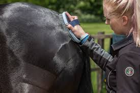 there s nothing lovelier than a horse sporting a sleek super shiny coat but how do the professionals go about achieving a show ready gleam