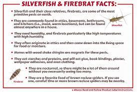 Silverfish Firebrats Control Strategies Products Maggies
