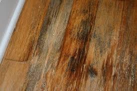 killing mold on hardwood floors