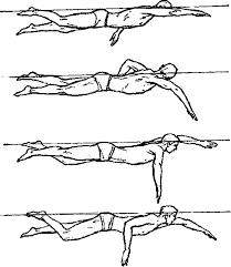 Реферат Плавание кроль на спине брасс на груди кроль на груди  П одготовительное
