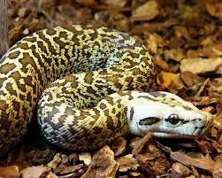 тату змея значение или что означает татуировка змея приснилась змея
