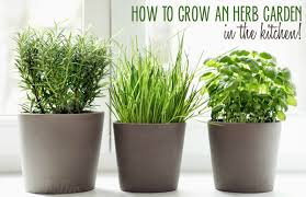 Herb Garden Kitchen 5 Ways To Grow An Herb Garden In The Kitchen