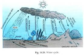 essay on the water cycle biogeochemical cycles biosphere  here they are cooled to form rain hail snow etc part of rain falls into oceans fig 14 28 some water falls into ground