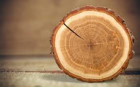 How Do You Measure Roundwood Timbeter