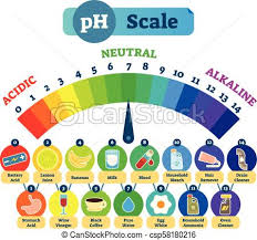 Alkaline Ph Level Chart Ph Acid Scale Vector Illustration Diagram With Acidic Neutral And Alkaline Examples