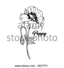 Poppy Flower Drawing Illustration Black And White With Line Art On