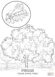 Small Picture Texas State Tree coloring page Free Printable Coloring Pages
