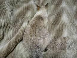 Resultado de imagen de animal invisible alborés