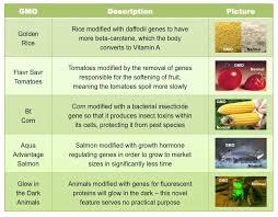 Aug 01, 2013 · transgenic plants have also been used for bioremediation of contaminated soils. Examples Of Gmos Bioninja