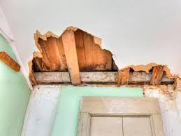 How to Remove Black Mold | HGTV