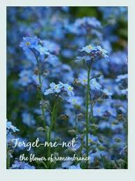 sample eulogies funeral speeches eulogy examples forget me nots the flowers of remembrance