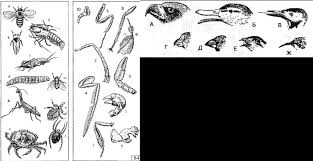 Контрольная работа по теме Эволюция класс Контент   festival 1 ru 2004 2005 articles 212800
