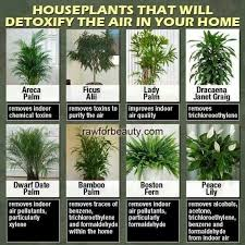 indoor plants that clean the air - - Yahoo Image Search Results
