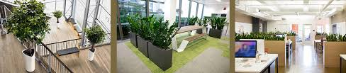 interior landscaping office. Perfect Landscaping GMG Office Plants And Interior Landscaping With E