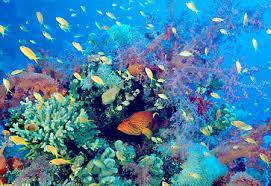 Species Diversity Definition Marine Biodiversity Marinebio Org