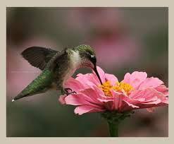 Marisol ❤ on Twitter | Animals, Marisol, Bird
