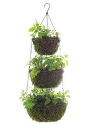 Hanging Planter Hanging Planter Archives Garden Therapy