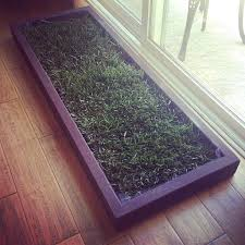 apartment dog potty grass for dogs in apartments apartment patio dog potty