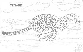 Small Picture Awesome Realistic Wildlife Coloring Pages Gallery Coloring Page