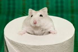 what can you use for hamster bedding