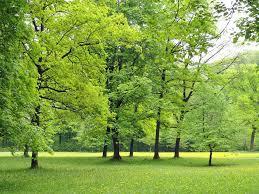 Resultado de imagen de bosques alemania