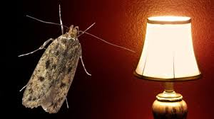 The Moth And The Lamp Very Sad Story Youtube