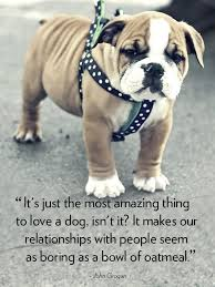 30 Dog Quotes That Will Melt Your Heart Dogs Love Dog Quotes