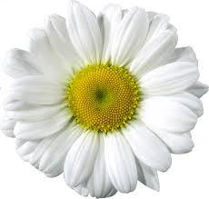 garland clipart daisy chain garland