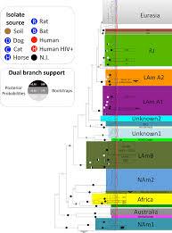 Maximum Likelihood Ml Tree Of Histoplasma Capsulatum