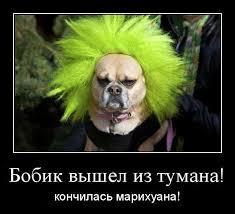 Перекрыт канал контрабандной поставки марихуаны в Россию, - СБУ - Цензор.НЕТ 2800