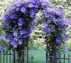 Image result for flowering vines