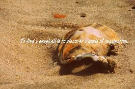 sea shell quotes wix quote seashell quotes