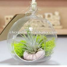 Decorative Hanging Glass Balls Fascinating Hand Blow Decor Hanging Glass BallAir Plant Glass Terrarium Buy