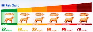 Cat Bmi Chart Body Mass Index Albert North Vet Clinic