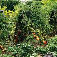 Small Picture Top 30 Vegetable Garden Design Software Plangarden Vegetable