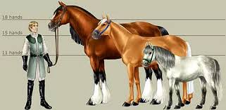 Size Colors Patterns Markings Maries Equine
