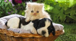 kittens and puppies.  And Intro Kittens U0026 Puppies Inside Kittens And Puppies