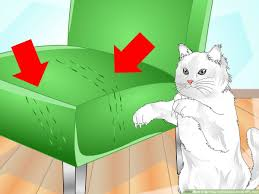 your cat to use a scratching post
