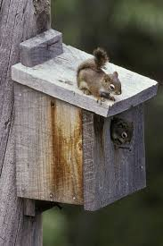 house plans pen2page of squirrel post