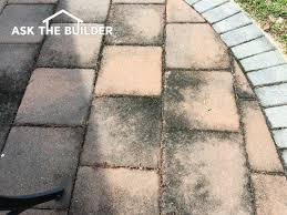 patio moss mold and mildew prevention