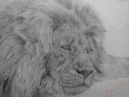 Leone Nemeo Come Disegnare Come Disegnare Una Matita Di Leone In