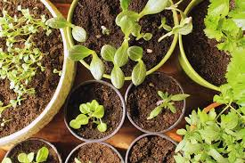 start seedlings indoors to plant your first vegetable garden gardenerspath com