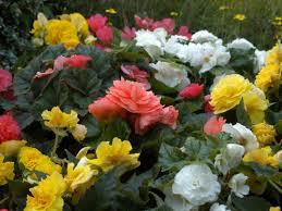 Easy Annual Plants That <b>Bloom</b> All <b>Summer</b> Long   DIY Network