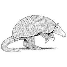 Small Picture 10 Funny Armadillo Coloring Pages For Your Little Ones