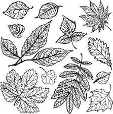 葉っぱモノクロ手書き線画のイラスト無料素材 イラスト無料素材